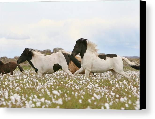 Horizontal Canvas Print featuring the photograph Running Horses by Gigja Einarsdottir