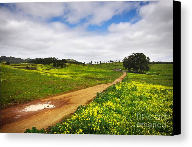 Autumn Canvas Print featuring the photograph Countryside Landscape by Carlos Caetano