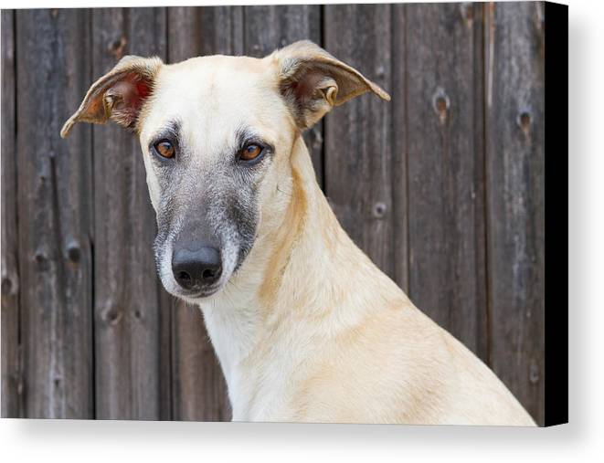 Horizontal Canvas Print featuring the photograph Portrait Of Dog by Elke Vogelsang