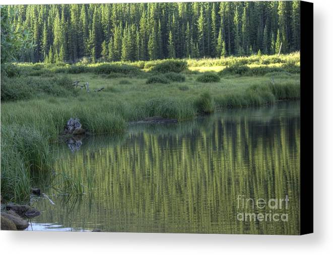 Willow Lake Canvas Print featuring the photograph A Study In Green by David Bearden