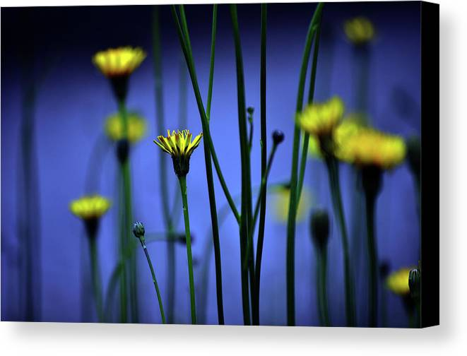 Horizontal Canvas Print featuring the photograph Avatar Flowers by Mauro Cociglio - Turin - Italy