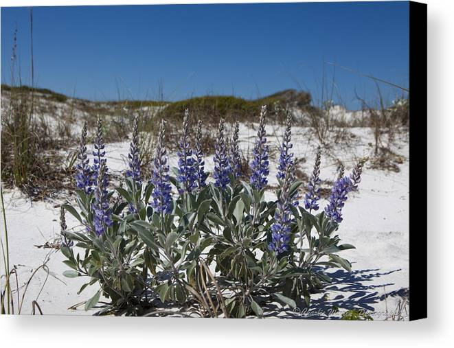 Beach Canvas Print featuring the photograph Beach Flora by Charles Warren