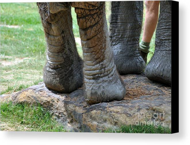Elephant Canvas Print featuring the photograph Best Foot Forward by Joanne Kocwin