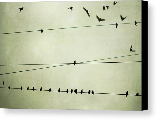 Horizontal Canvas Print featuring the photograph Birds On Telephone Wire by Lucy Loomis, Photographer