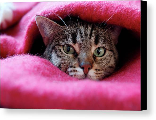 Horizontal Canvas Print featuring the photograph Cat's Den by Christian JACQUET