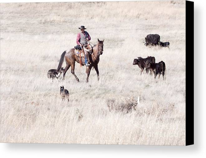 Cowboy Canvas Print featuring the photograph Cowboy by Cindy Singleton