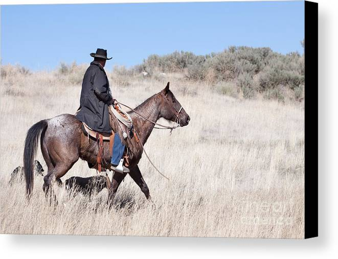 Cowboy Canvas Print featuring the photograph Cowboy On Horseback by Cindy Singleton