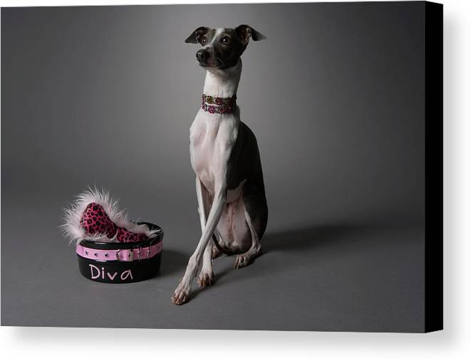 Horizontal Canvas Print featuring the photograph Dog With Diva Bowl by Chris Amaral