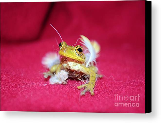 Frog Canvas Print featuring the photograph Ever Have One Of Those Days by Lynda Dawson-Youngclaus