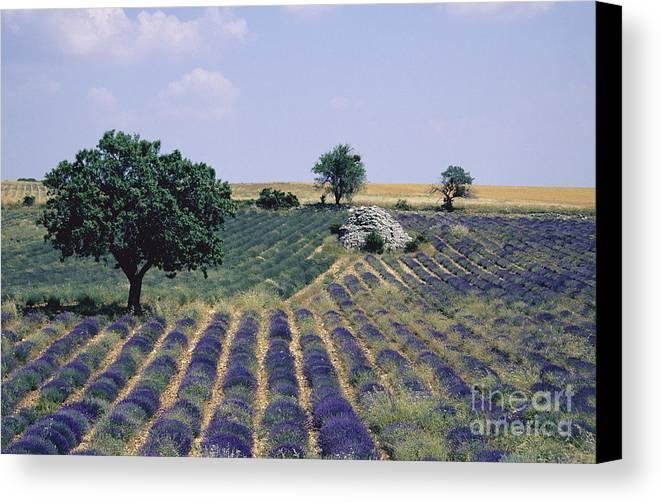 The Tourist Trade Canvas Print featuring the photograph Field Of Lavender. Sault. Vaucluse by Bernard Jaubert