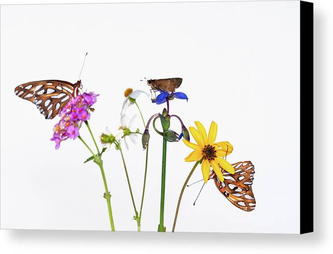 Horizontal Canvas Print featuring the photograph Gulf Fritillary And Brown Skipper by Jim McKinley
