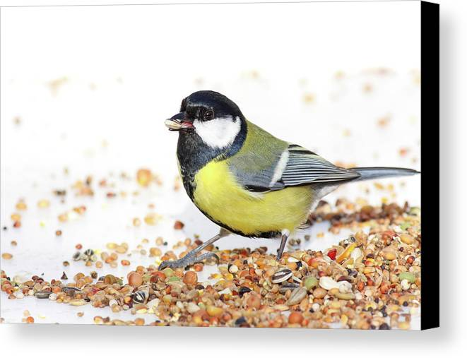 Horizontal Canvas Print featuring the photograph Hungry Bird by MarcelTB