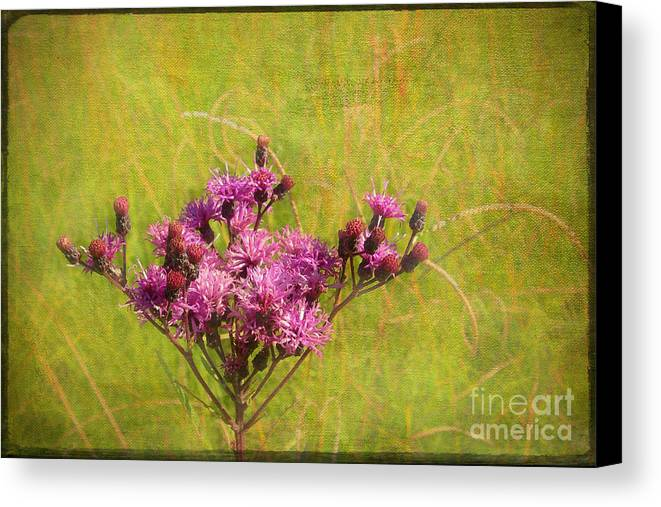 Purple Canvas Print featuring the photograph Ironweed In Autumn by Judi Bagwell