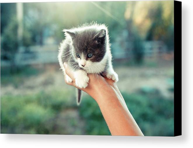Horizontal Canvas Print featuring the photograph Kitten In Hand, 2010 by Emily Golitzin
