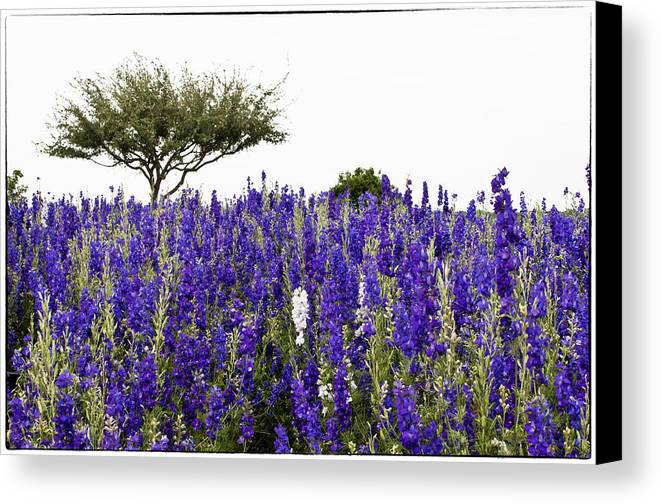 Lavender Canvas Print featuring the photograph Lavender Field by Lisa Spencer