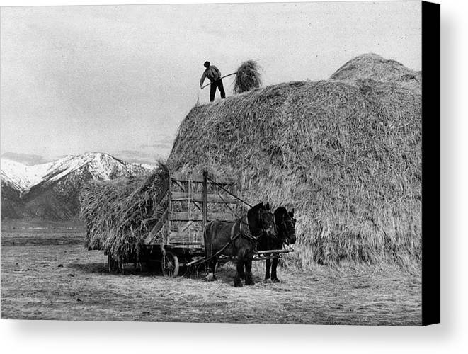 Adult Canvas Print featuring the photograph Loading Hay by Arthur Rothstein