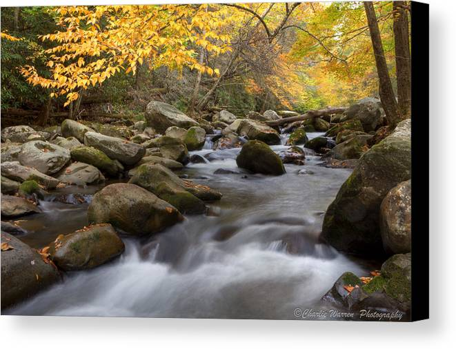 Little River Canvas Print featuring the photograph Mid Stream by Charles Warren