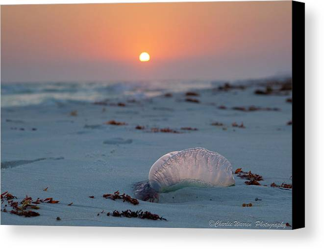 Beach Canvas Print featuring the photograph Peaceful Man Of War by Charles Warren