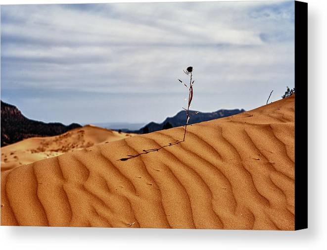 Hdr Canvas Print featuring the photograph Perseverance by Stephen Campbell