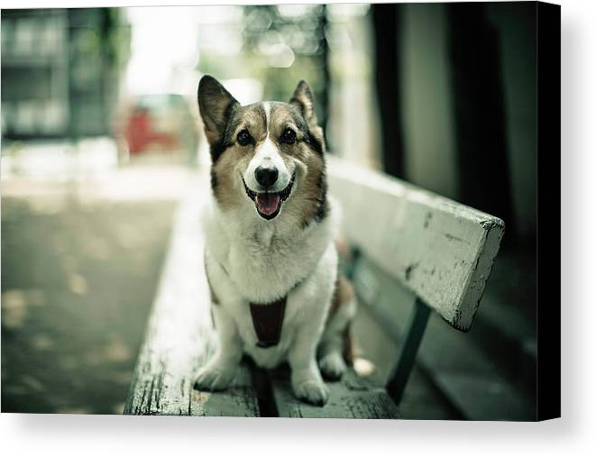 Horizontal Canvas Print featuring the photograph Portrait Of Dog by Moaan