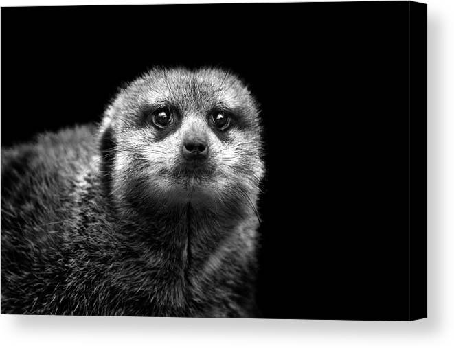 Horizontal Canvas Print featuring the photograph Portrait Of Meerkat by Malcolm MacGregor