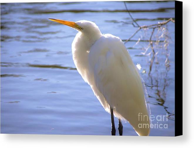 Egret Canvas Print featuring the photograph Relaxing by Lynda Dawson-Youngclaus