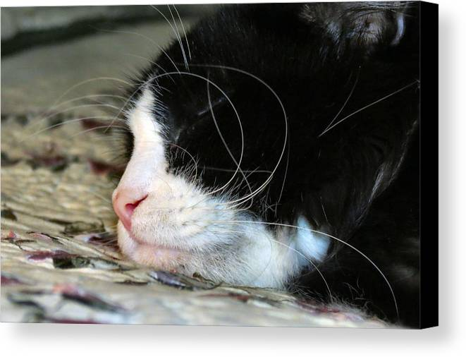 Cat Canvas Print featuring the photograph Sleepytime by Art Dingo