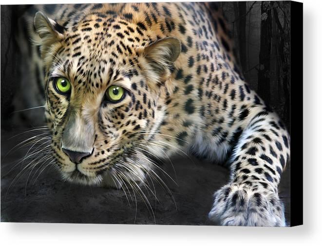Sundari Canvas Print featuring the digital art Sundari by Big Cat Rescue