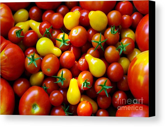 Abundance Canvas Print featuring the photograph Tomatoes Background by Carlos Caetano