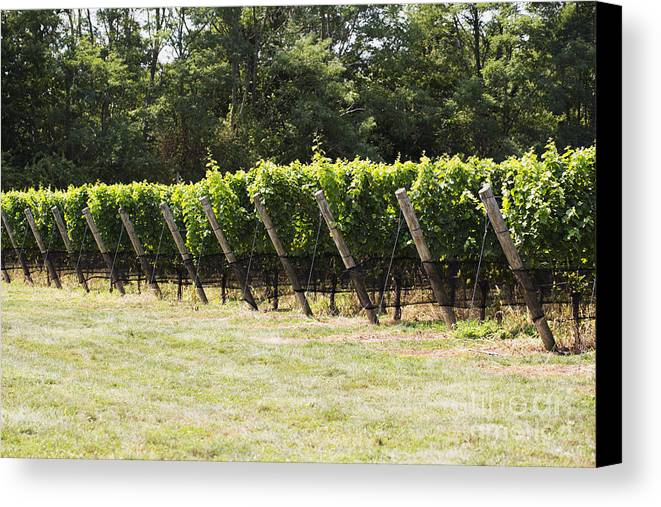 Vineyard Canvas Print featuring the photograph Vineyards by Leslie Leda