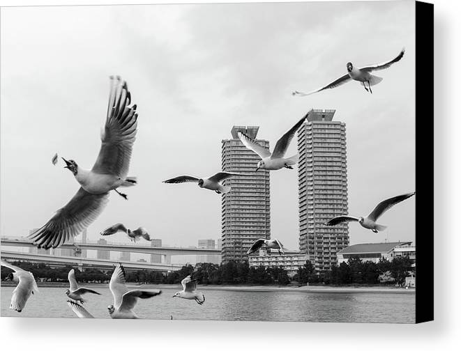Horizontal Canvas Print featuring the photograph White Birds In Flight by BZause a picture is worth a thousand words.