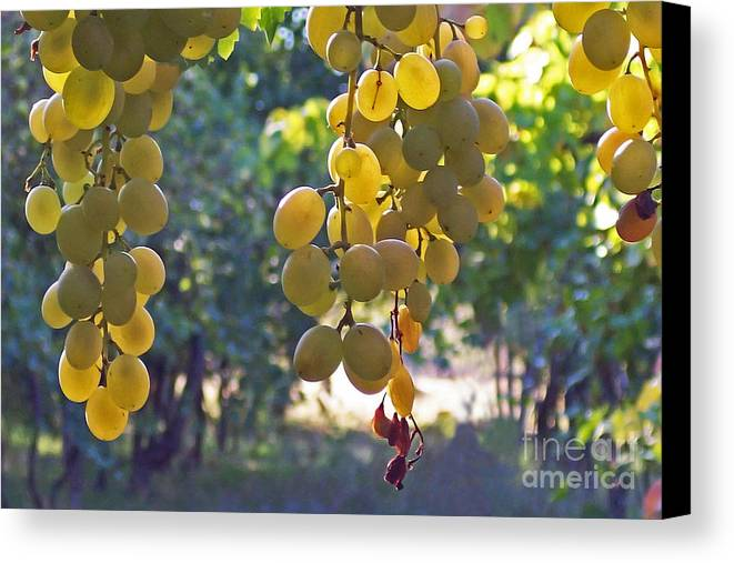 Grapes Canvas Print featuring the photograph White Grapes by Barbara McMahon