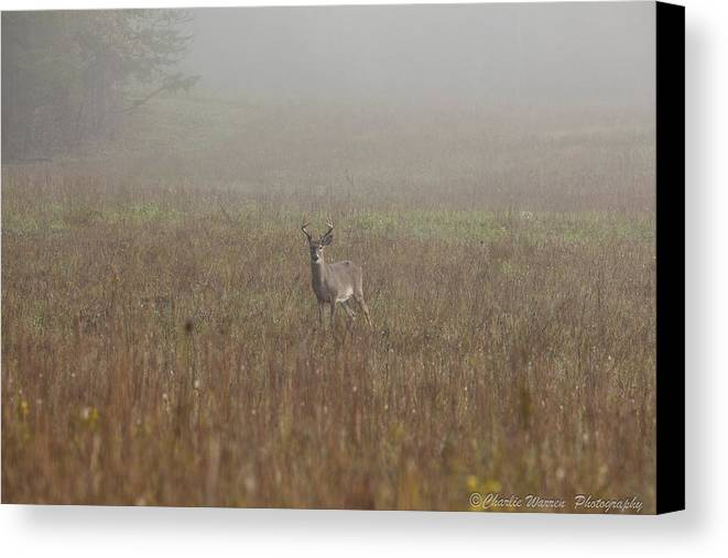 Deer Canvas Print featuring the photograph Young Buck by Charles Warren