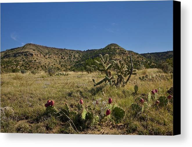 Black Mesa Canvas Print featuring the pyrography Black Mesa Cacti by Charles Warren
