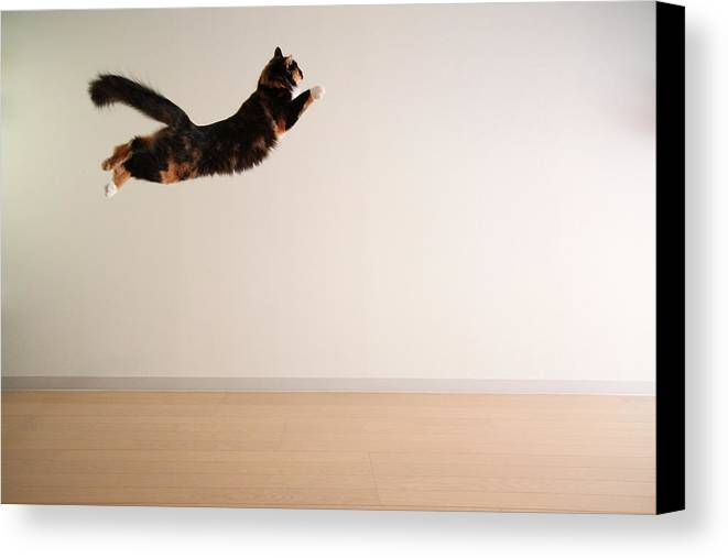 Horizontal Canvas Print featuring the photograph Airborne Cat by Junku