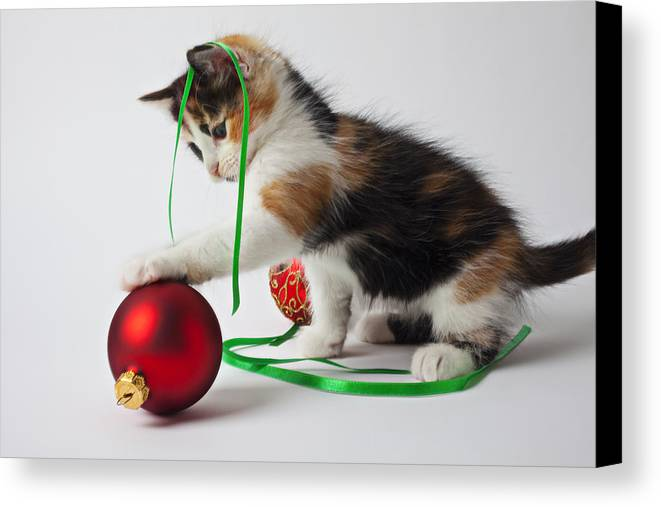 Calico Kitten Christmas Ornaments Canvas Print featuring the photograph Calico Kitten And Christmas Ornaments by Garry Gay