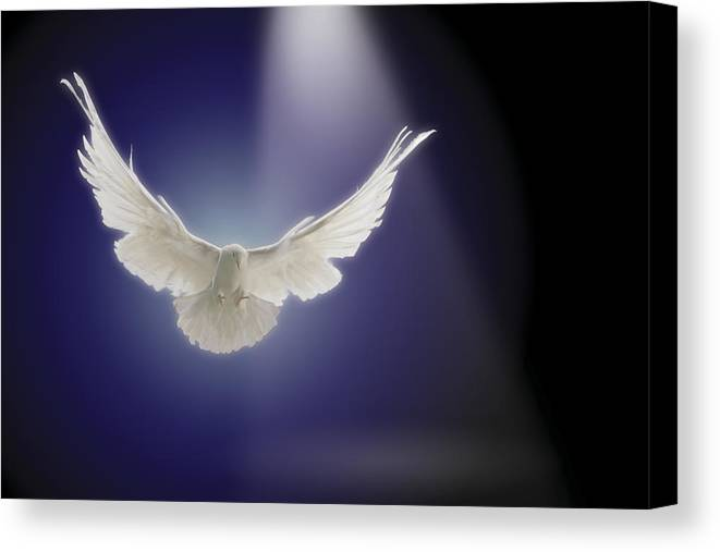Copy Space Canvas Print featuring the photograph Dove Flying Through Beam Of Light by Comstock Images