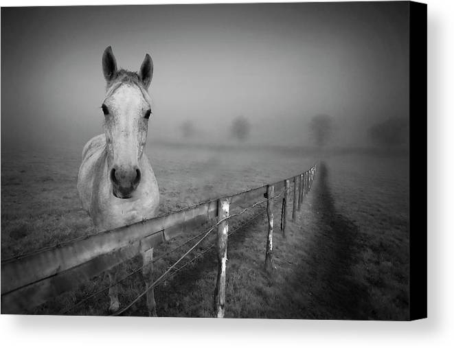 Horizontal Canvas Print featuring the photograph Equine Fog by Taken with passion
