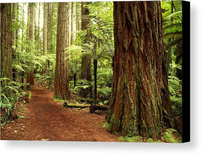 Hiking Trail Canvas Print featuring the photograph Forest by Les Cunliffe