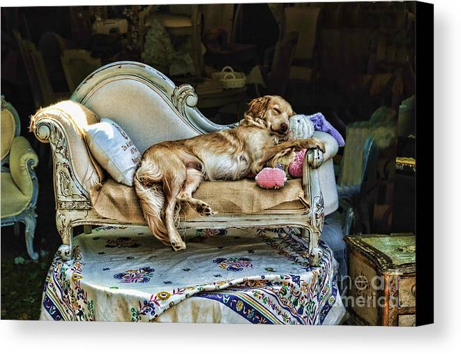 Dog Canvas Print featuring the photograph Nap Time by Edward Sobuta