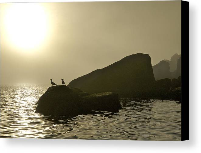 Animals In The Wild Canvas Print featuring the photograph Norway, Tromso, Silhouette Of Pair by Keenpress