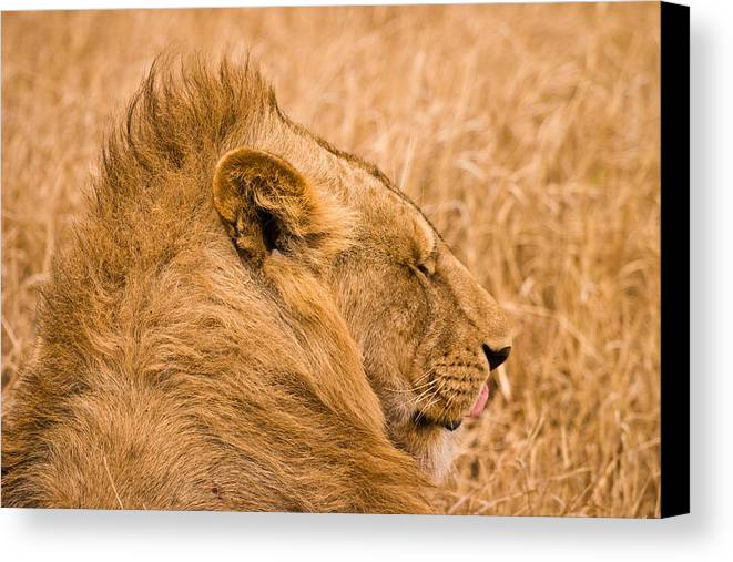 3scape Photos Canvas Print featuring the photograph Punk Mane by Adam Romanowicz