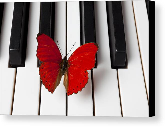 Red Butterfly Canvas Print featuring the photograph Red Butterfly On Piano Keys by Garry Gay