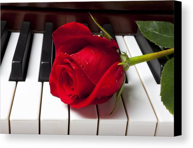 Red Rose Roses Canvas Print featuring the photograph Red Rose On Piano Keys by Garry Gay