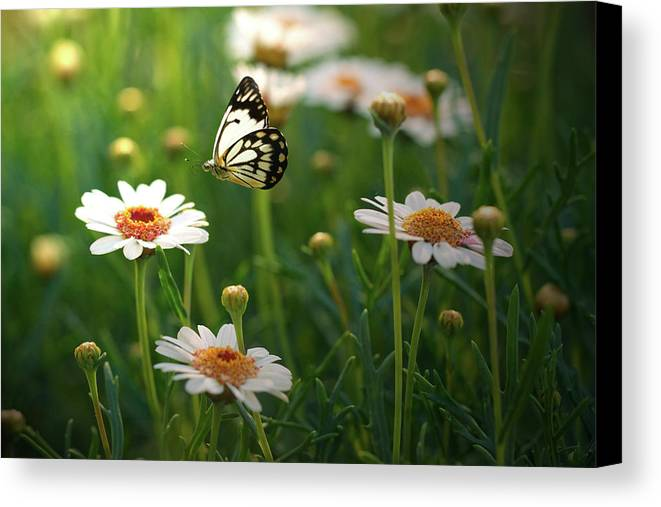 Horizontal Canvas Print featuring the photograph Spring In Air. by Photos by Shmelly