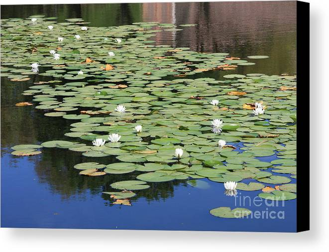 Water Canvas Print featuring the photograph Water Lily Pond by Carol Groenen
