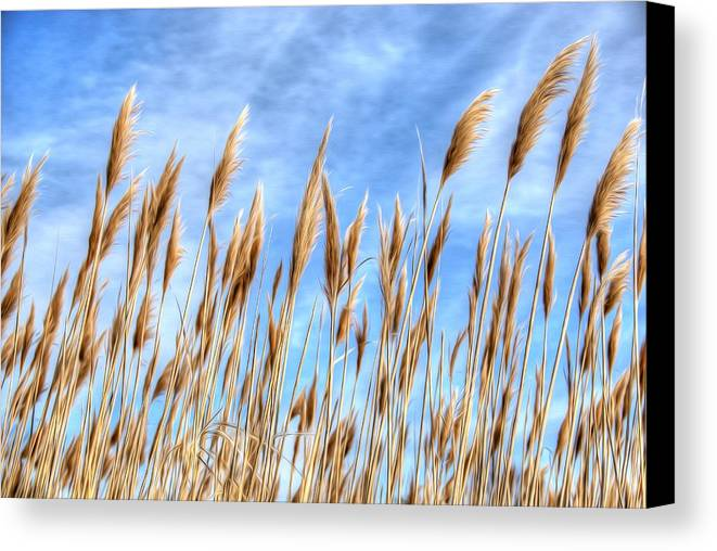 Sea Canvas Print featuring the photograph Sea Breeze by Kelvin Booker