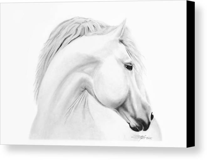 Horse Canvas Print featuring the drawing Horse by Don Medina