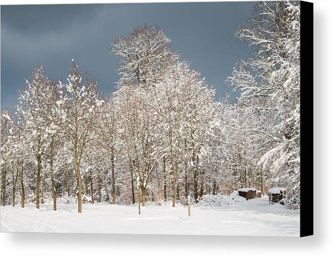 Winter Canvas Print featuring the photograph Snow Covered Trees In The Forest In Winter by Matthias Hauser