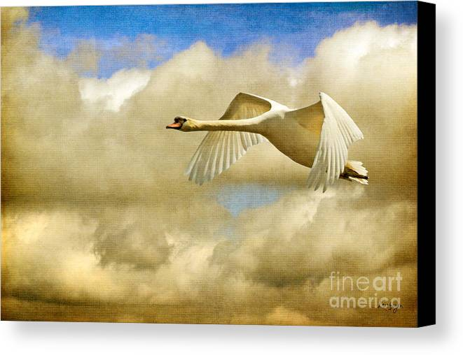 Nature Canvas Print featuring the photograph Swan Song by Lois Bryan